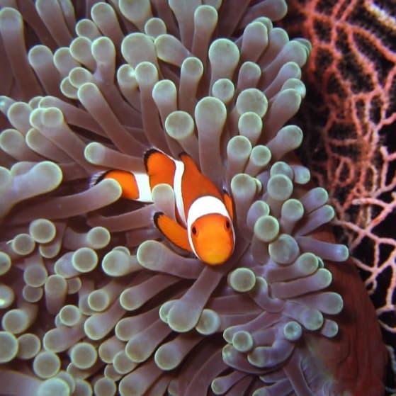 Original Photography, Copyright © Tom Gruber, Ocean Advocate, Underwater Photography